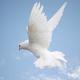 آزادی فصل انسان از حیوان: مانیفست آزادی اندیشه در کلام الله مجید